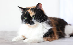 Colorful cat in white room Royalty Free Stock Photos