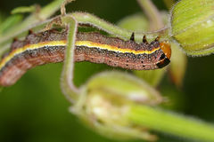 Colorful caterpillar Royalty Free Stock Images