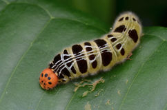 Colorful Caterpillar Stock Photography