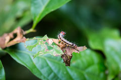 Colorful caterpillar on leaf Stock Images