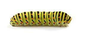 Colorful caterpillar Stock Photos