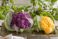 Colorful Cauliflower-purple and yellow Stock Images