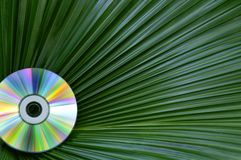 Colorful CD Against Palm Leaf Stock Photography