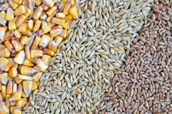 Colorful cereal seeds Royalty Free Stock Photos