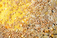 Colorful cereal seeds background Stock Photos