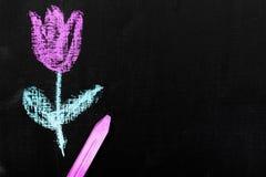 Chalk drawing on a chalkboard: beautiful tulip flower,