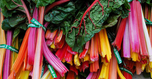 Colorful Chard Stock Photos