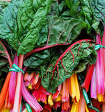 Colorful Chard Stock Images