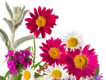 Colorful cheerful bunch Royalty Free Stock Photography