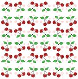 Colorful Cherries background in red and white Stock Photography