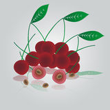 Colorful cherries eps10 Stock Image