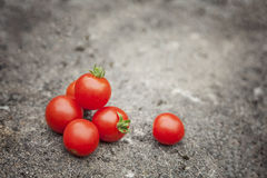 Colorful cherry tomatoes Stock Images