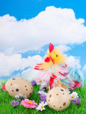 A colorful chicken Royalty Free Stock Photo