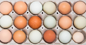 Colorful chicken eggs Royalty Free Stock Images