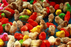 Colorful chicken pups Stock Photos