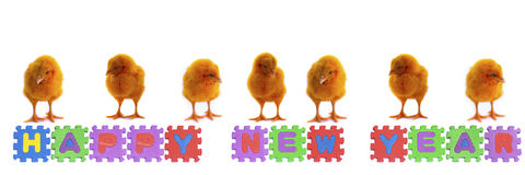 Colorful of chicks on New Year 2015 Stock Images