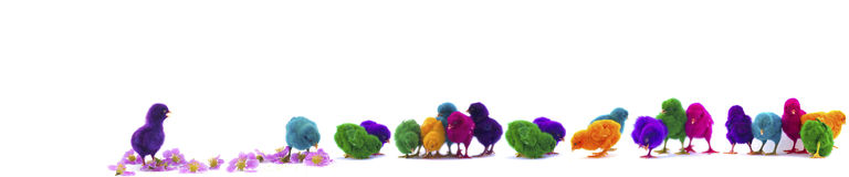 Colorful of chicks on New Year 2015 Royalty Free Stock Photos