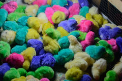 Colorful chikens royalty free stock photo