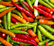 Colorful chili Royalty Free Stock Photo