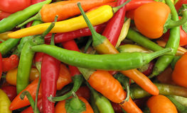 Colorful chili peppers full frame Stock Images