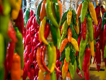 Colorful Chili Peppers hanging. Many color ful Mexican Chili peppers used for decoration in the market sqaure. they are hung up to dry thenuse for cooking in Stock Image