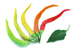 Colorful chili peppers on a white background Stock Photos