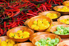 Colorful chilis Stock Photos