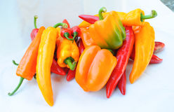 Colorful chilli pepper. Isolate on white background. Raw material for food or cooking Royalty Free Stock Photography