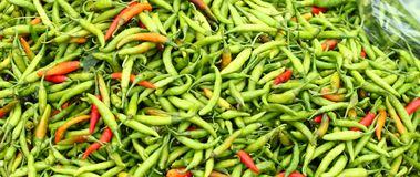 Colorful chillies. Fresh colorful chillies, piled up in Asian market Stock Images