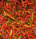 Colorful chillies Royalty Free Stock Photo