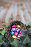 Colorful chocolate mini easter eggs in a birds nest in the garden Royalty Free Stock Photo