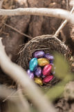 Colorful chocolate mini easter eggs in a birds nest in a tree Royalty Free Stock Image