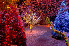 Colorful Christmas lights on trees Royalty Free Stock Photos
