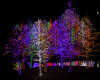 Colorful Christmas Trees. Trees decorated with brightly colored LED lights beside water at night Stock Photos