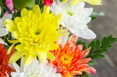 Colorful Chrysanthemum flower Stock Photography