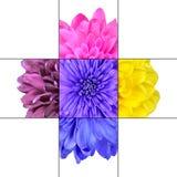 Colorful Chrysanthemum Flower Mosaic Design Royalty Free Stock Photos