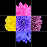Colorful Chrysanthemum Flower Mosaic Design Stock Image