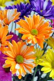 Colorful chrysanthemum Stock Photo