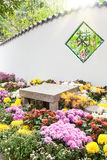 The Colorful chrysanthemums flowerbed in garden Royalty Free Stock Photos