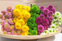 Colorful chrysanthemums flowers on wooden plate. Colorful chrysanthemums flowers on plate Stock Photos