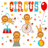 Colorful circus lions Royalty Free Stock Images