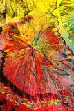 Colorful citric acid crystals. Macro view of colorful red and yellow citric acid crystals viewed under polarized light Royalty Free Stock Images