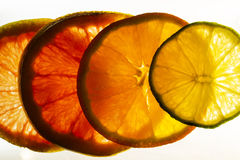 Colorful Citrus Fruit Slices with Backlighting Stock Image
