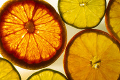 Colorful Citrus Fruit Slices with Backlighting Royalty Free Stock Images