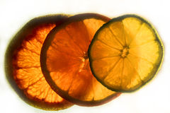 Colorful Citrus Fruit Slices with Backlighting Stock Photography