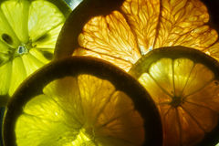 Colorful Citrus Fruit Slices Royalty Free Stock Photos