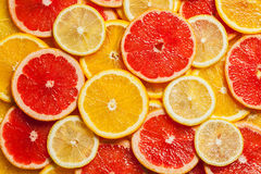Colorful citrus fruit slices Stock Images