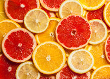 Colorful citrus fruit slices Royalty Free Stock Photography