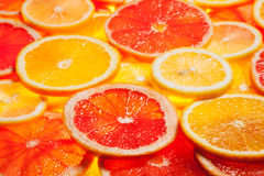Colorful citrus fruit slices Stock Image