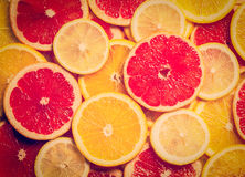 Colorful citrus fruit slices Stock Photography